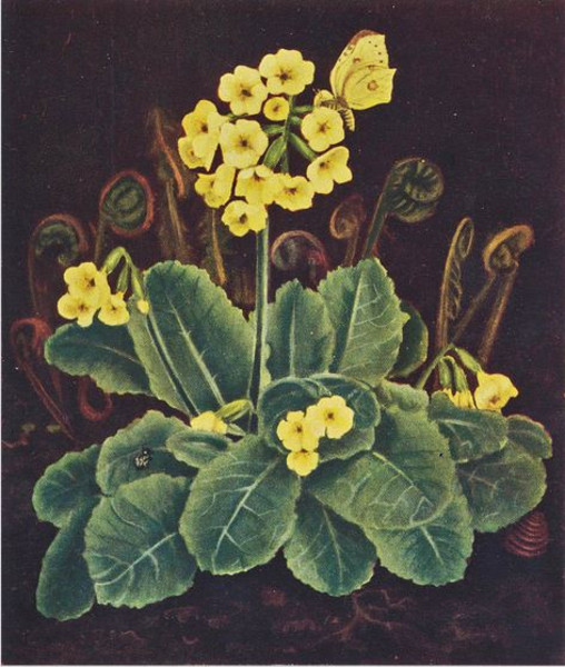 Kunstgalerie Dethleffs: 12 der wieder entdeckten Blumengemälde in Öl