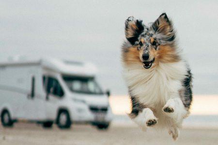 Hundefreundliche Stellplätze für das Camping mit Hund
